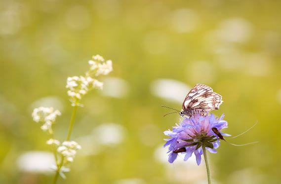 Insekten 1_Bild im Blog