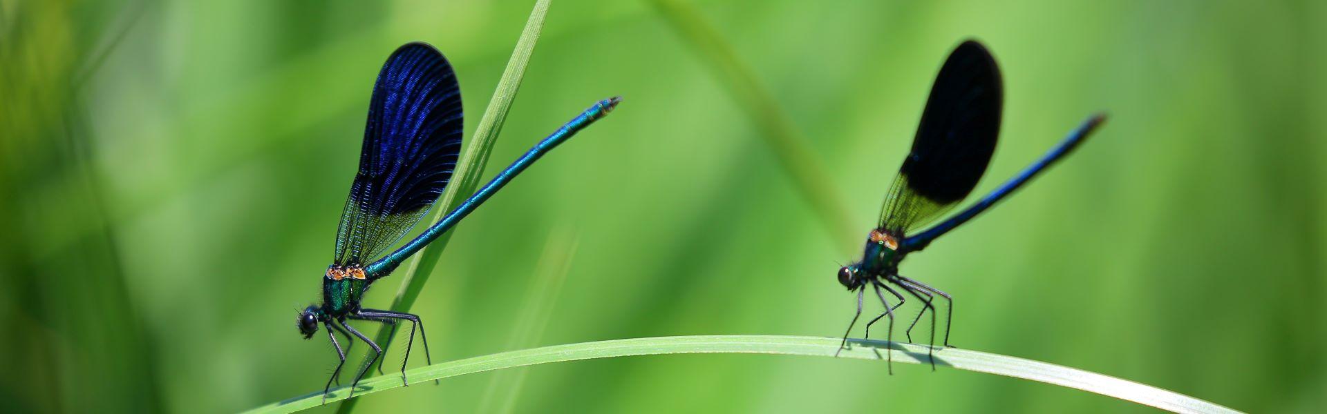 Insekten 1_Header