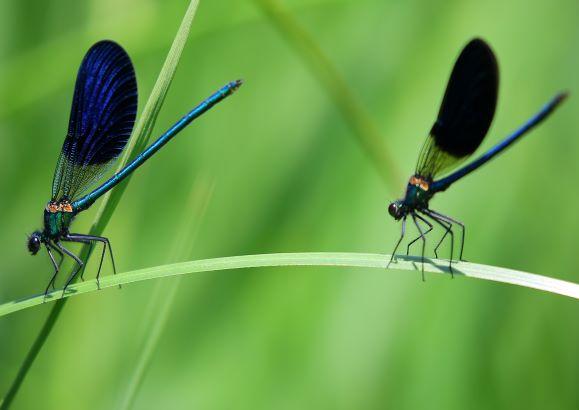 Insekten 1_Teaser