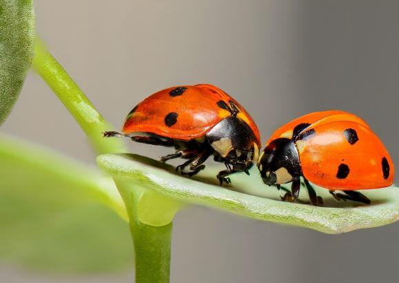 Insektenhotel 2_Teaser